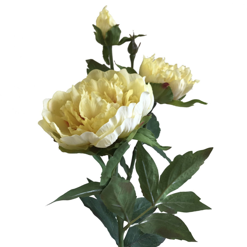 "Peony 30"" (Pack of 3)"