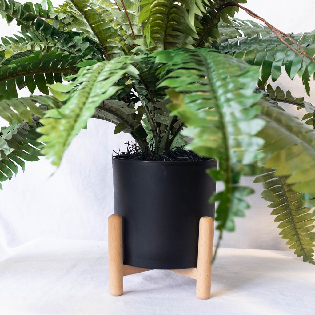 Potted Garden Fern