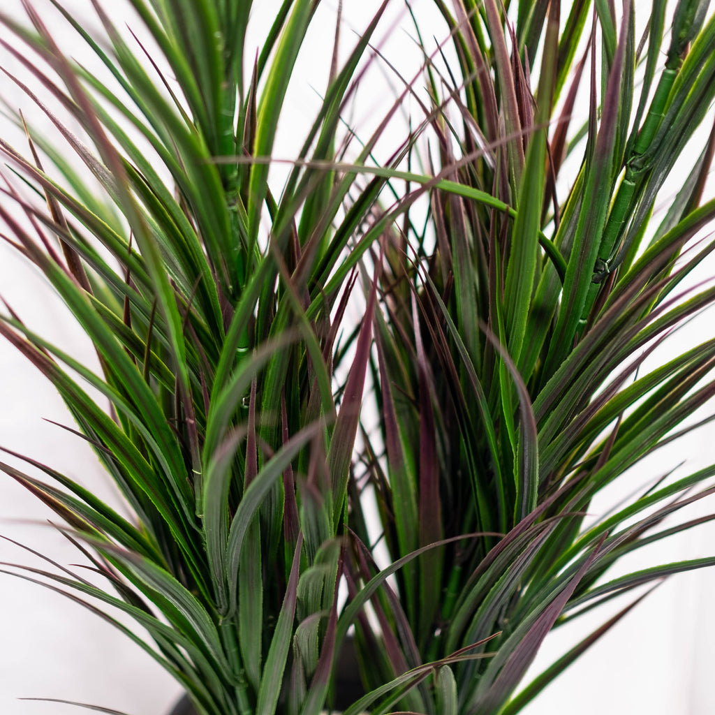 Reed Grass Potted