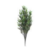 Rosemary Bush (Pick up)
