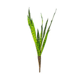 Sansevieria Plant (Pack of 3)