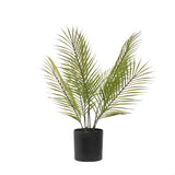 Areca Palm Tabletop