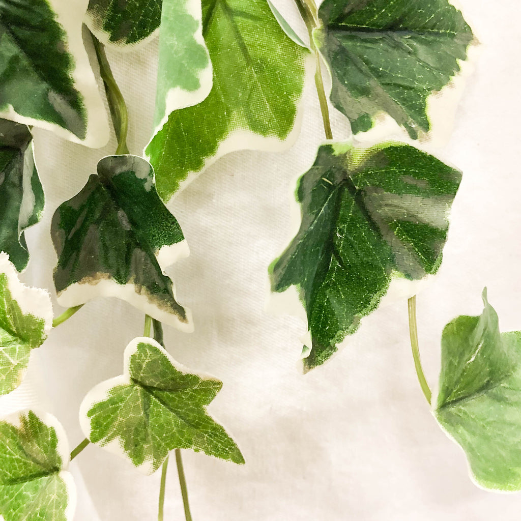 English Ivy Bush (Set of 2)