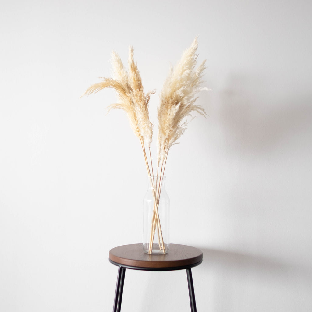 """Wheat"" Pampas 25.5""-28"" (Pack of 6)"