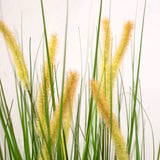 Cat Tail Potted Grass