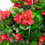 Azalea Flowering Basket