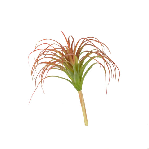 "AIR PLANT 10"" (PACK OF 3)"
