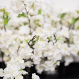 "Cherry Blossom Stems18"", (Pack of 12)"