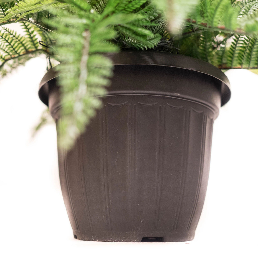 Outdoor Potted Fern