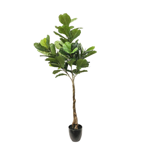 Fiddle Tree Leaf 64""