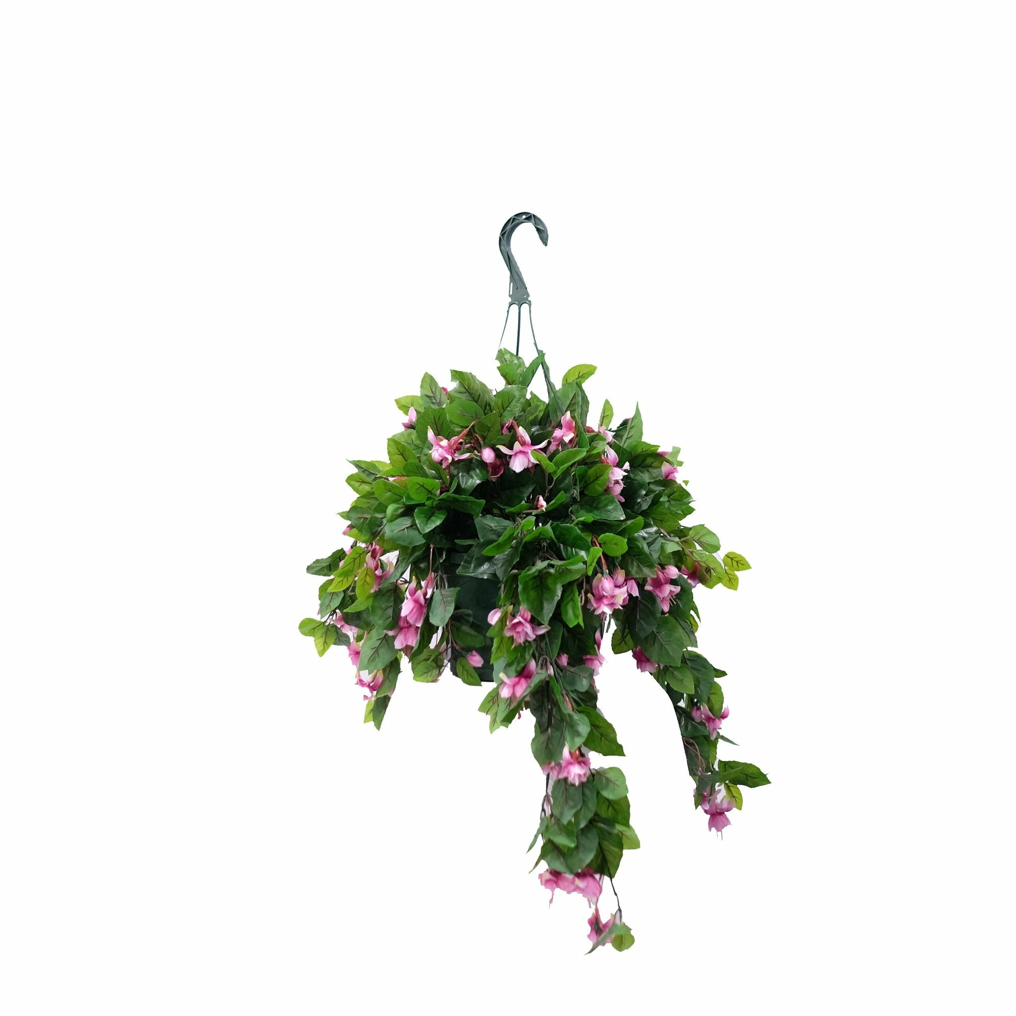 Fuchsia Flowering Basket
