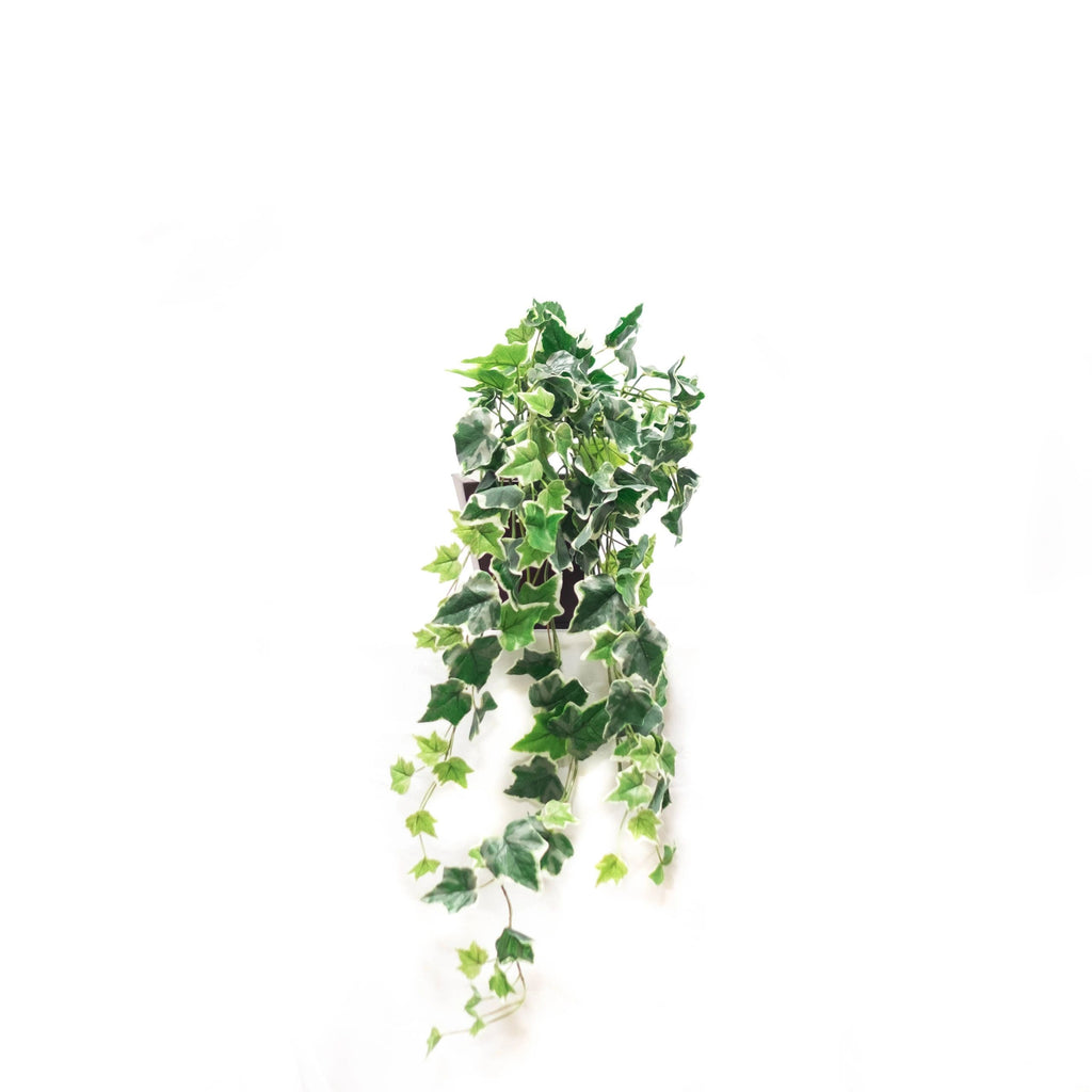 Hanging Greenery (Set of 2)