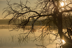 Tree next to the Guadiana river at dawn