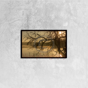 Tree Next To The Guadiana River At Dawn - Canvas framed