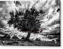 Load image into Gallery viewer, Lonely Tree Dying In Black And White - Acrylic Print