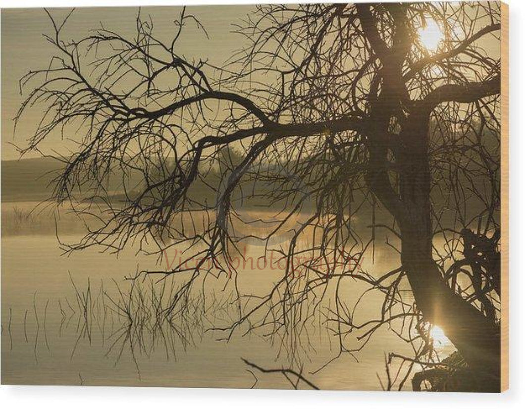 Tree Next To The Guadiana River At Dawn - Wood Print