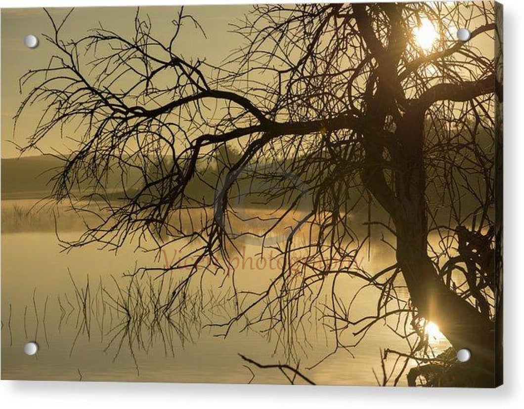 Tree Next To The Guadiana River At Dawn - Acrylic Print