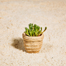 Load image into Gallery viewer, Mini Sierra Cement Basket Planter