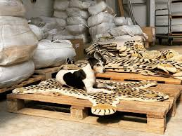 Small Drowsy Tiger Rug