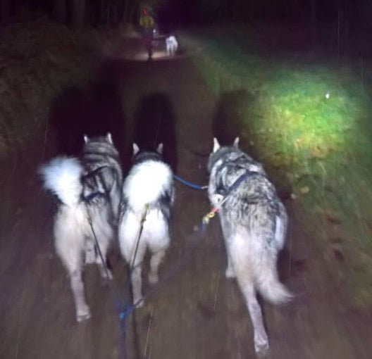 Event Report: AMWA Swinley Night Trek – 19th November 2016