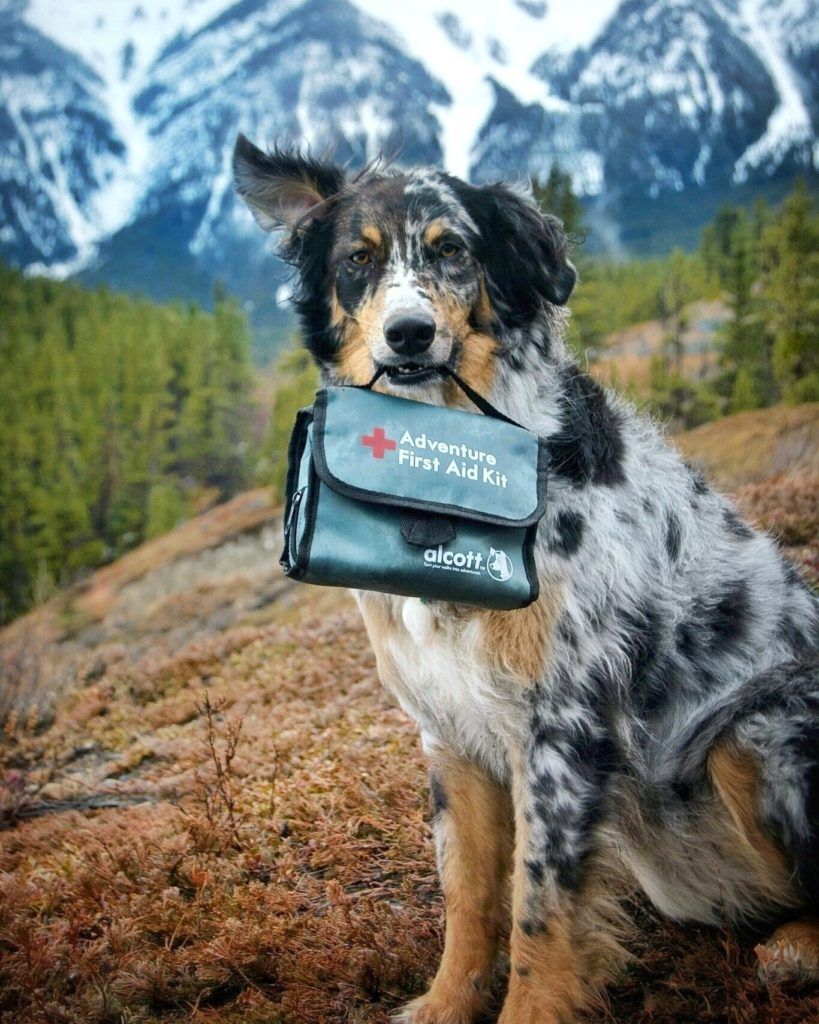 First Aid Kit for Dogs (Alcott)