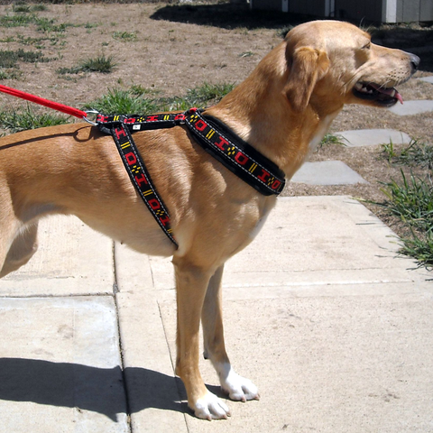 Distance Harness (Howling Dog Alaska)