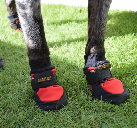 Dog Boots - Protector Set of 4 (Howling Dog Alaska)