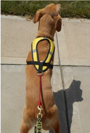 Tough Skin Ultra Dog Harness