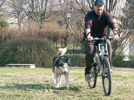 Walky Dog Plus - Bike Attachment