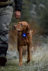 The Beacon Safety Light (Ruffwear)