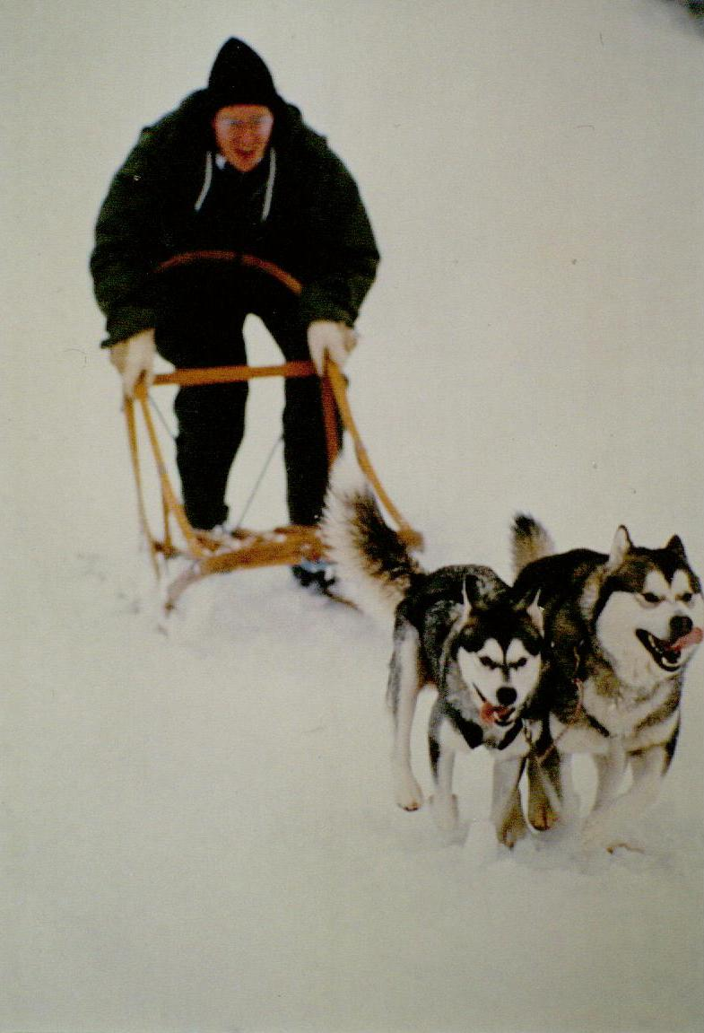 This is my husband Rip with Kooskia's A Touch of Velvet WPD WTD (Velvet-double lead on our full team with her son Trouble) and Targhee's Tugiak Tuggers WPD WTD (Tuggers) for a photo shoot for a piece The Seattle Times was doing on dog sledding. Photo taken in Snoqualmie Pass, WA