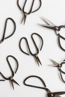 Black Butterfly Scissors