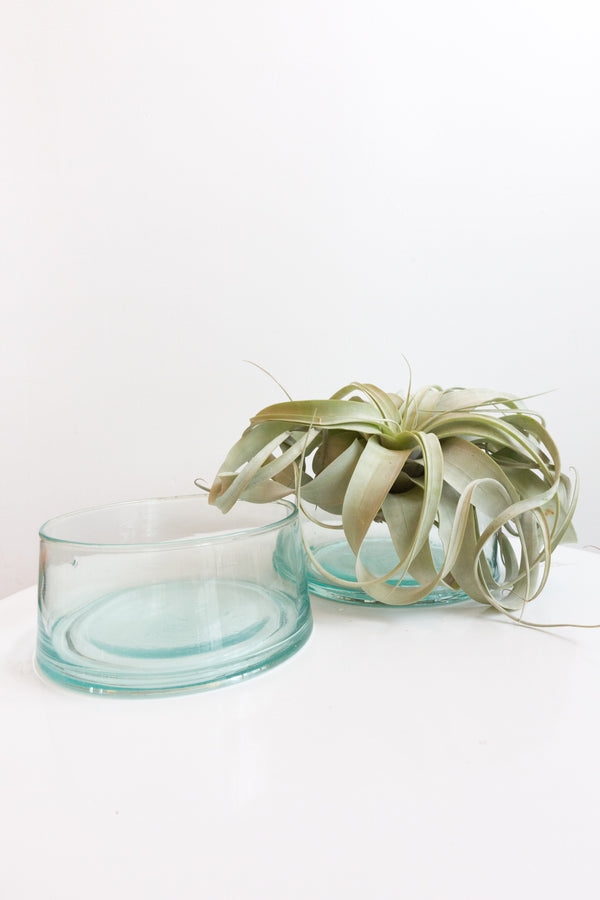 Socco Designs Glass Salad Bowl