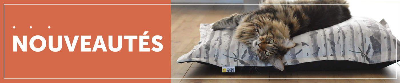 New-arrivals-for-cats-french