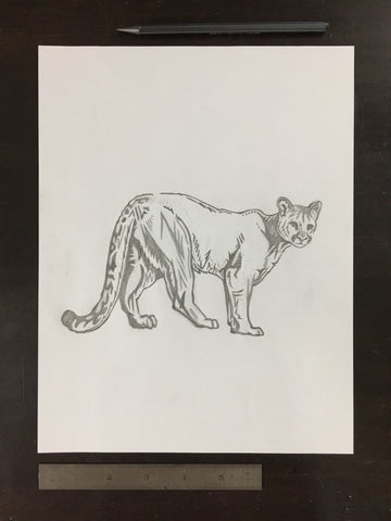 Original drawing #034 - Cougar