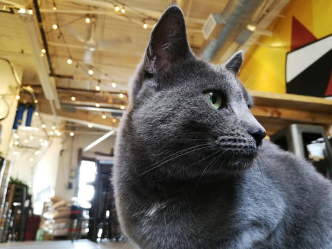 Maris our brewery cat