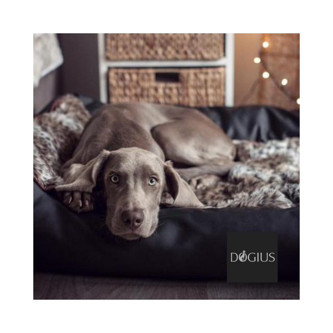 dogius-luxury-dog-beds-&-blankets