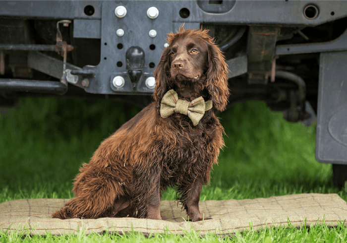 tweed mill collar and bow tie