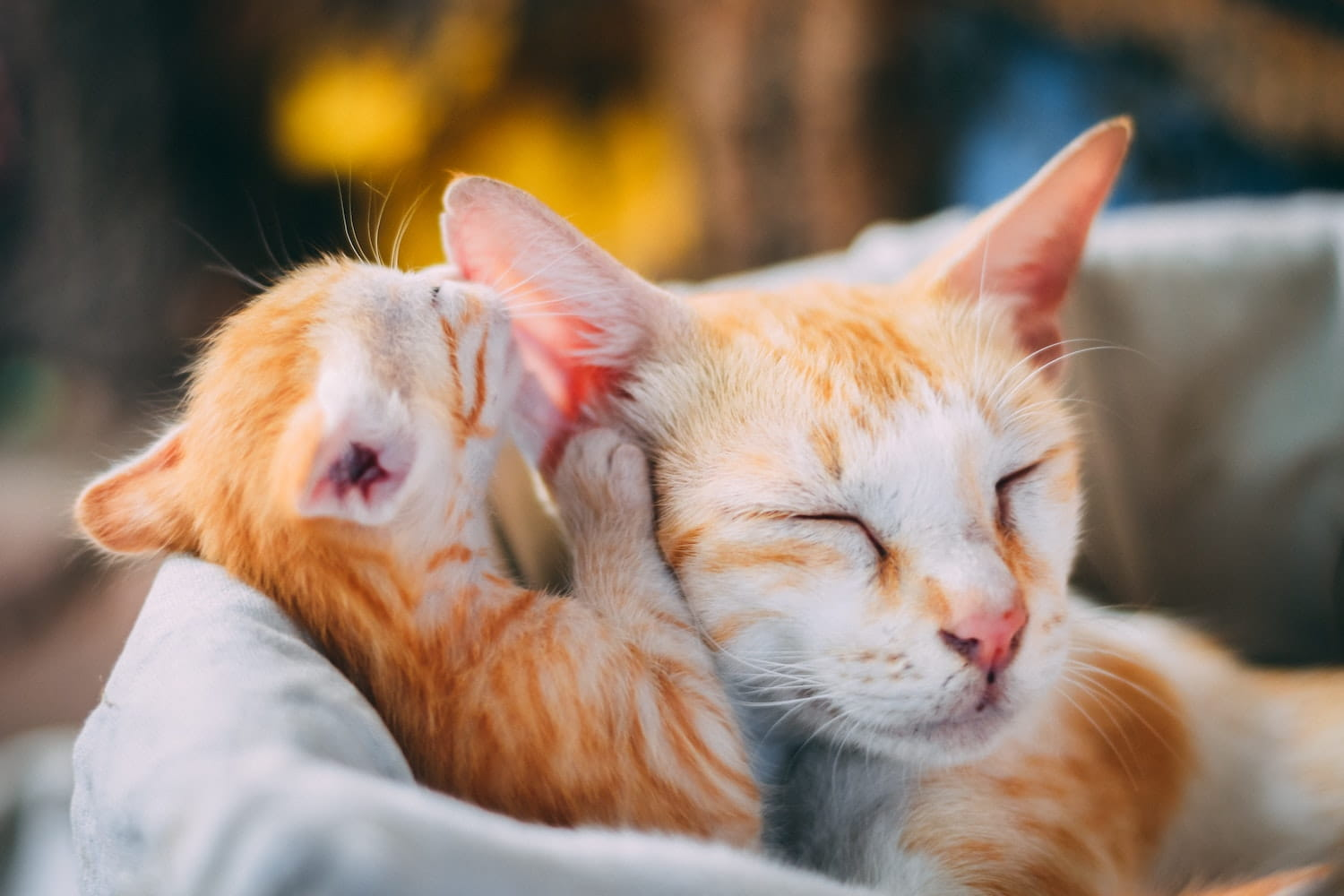 A cat and a kitten snuggled in bed