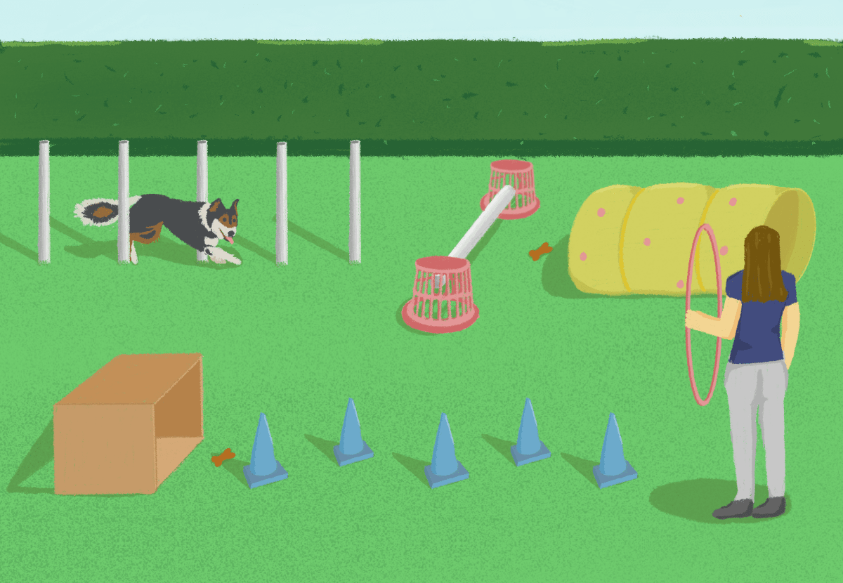 illustration showing a range dog activities for the garden