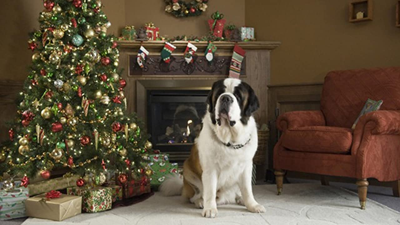 Beethoven the St Bernard sits next to a Christmas tree - from the film 'Beethoven's Christmas Adventure'