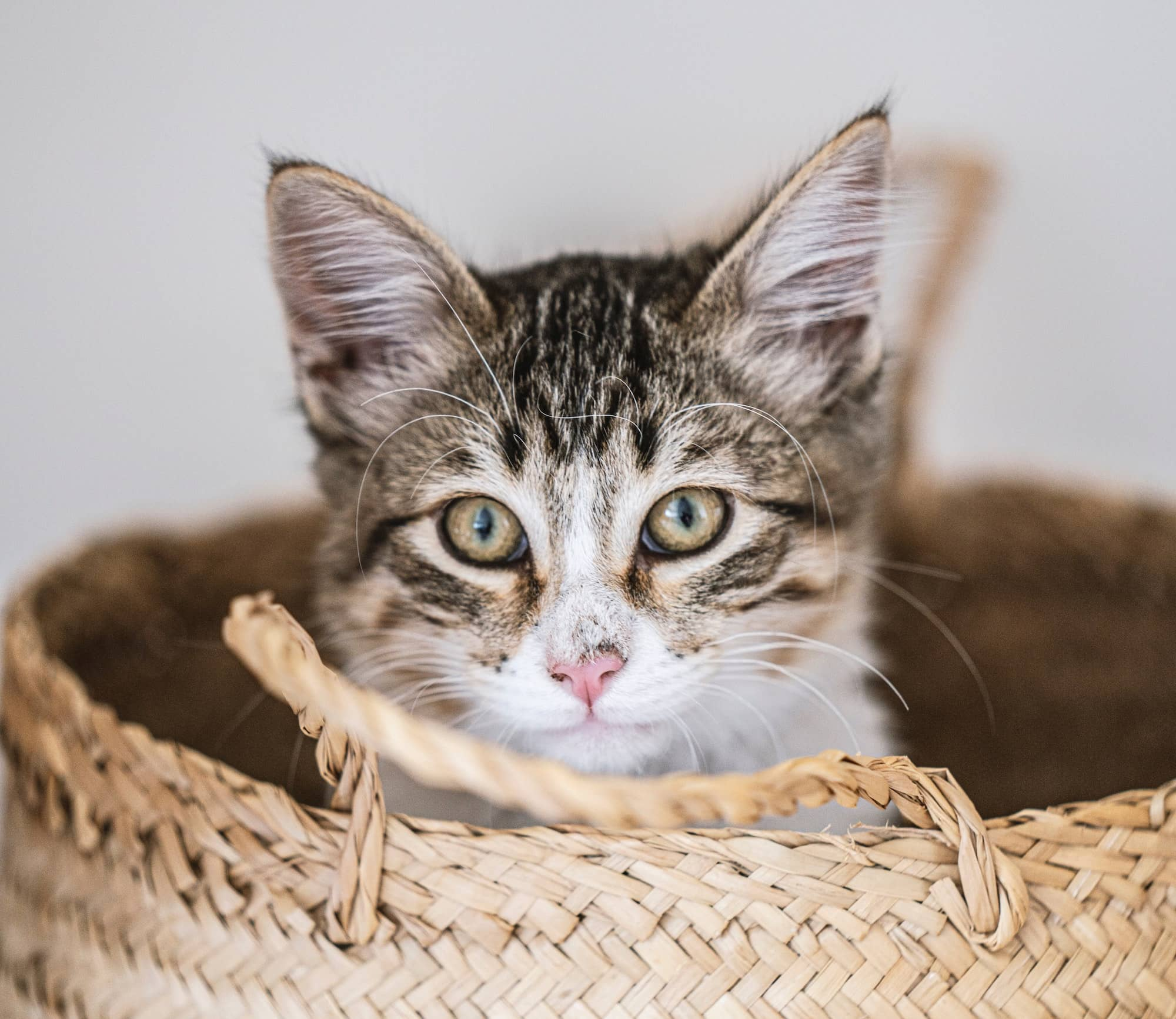 Cat sitting in a woven basket