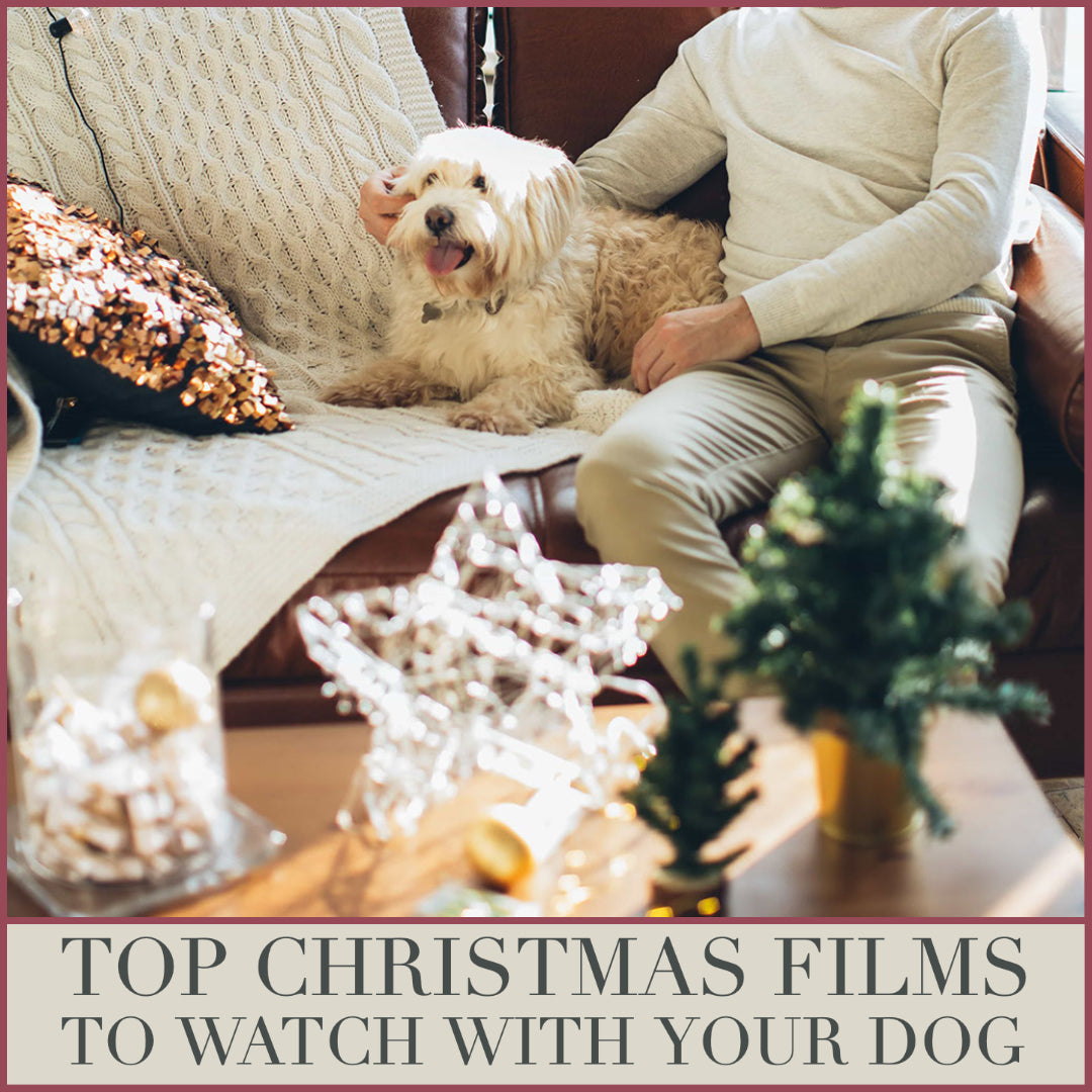 Tope Christmas films to watch with your pets