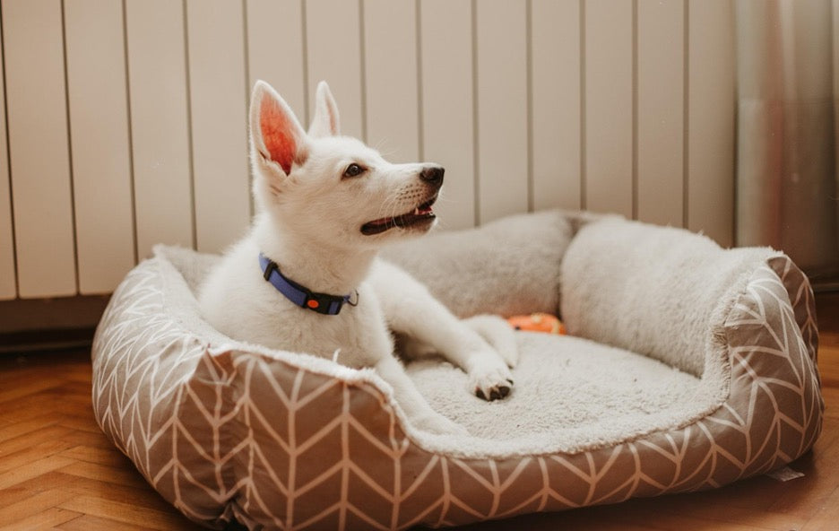A small white dog relaxes in their luxury dog bed