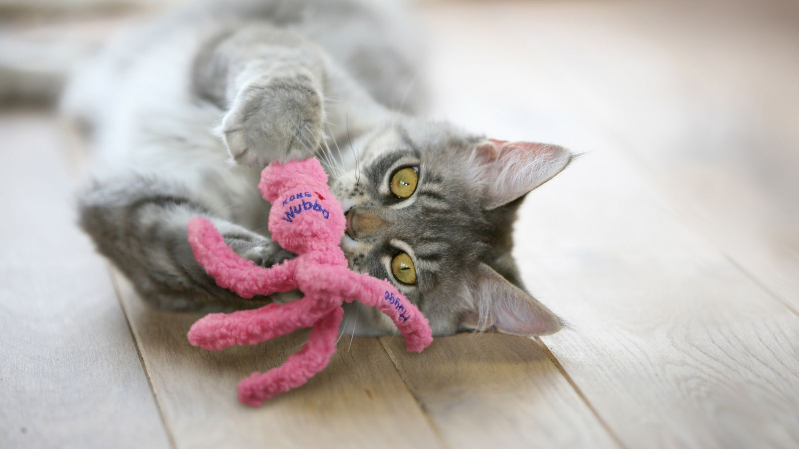 KONG Wubba catnip toy for cats