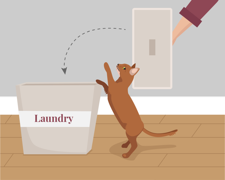 A cat owner preventing their cat from jumping in the laundry basket.
