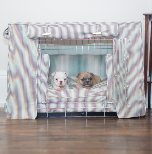 Two frenchie puppies in a crate set