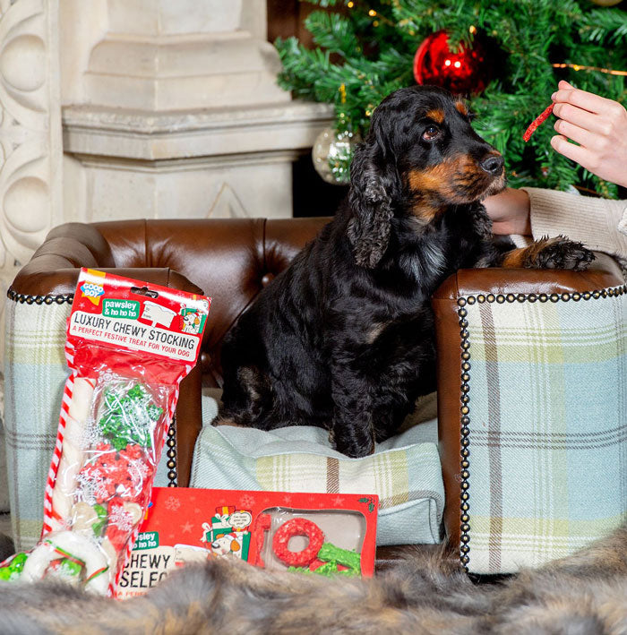 Christmas Spaniel on a L&L Chesterfield