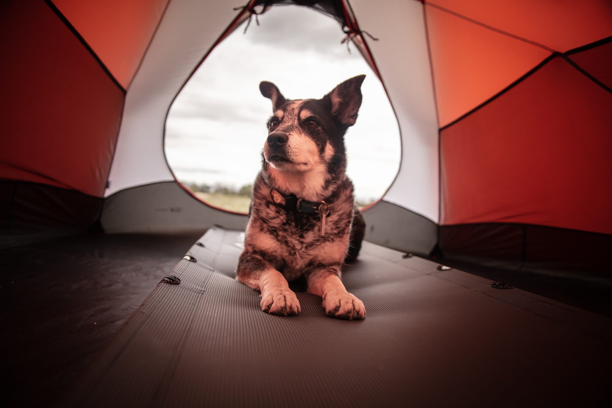 A dog sitting in a tent