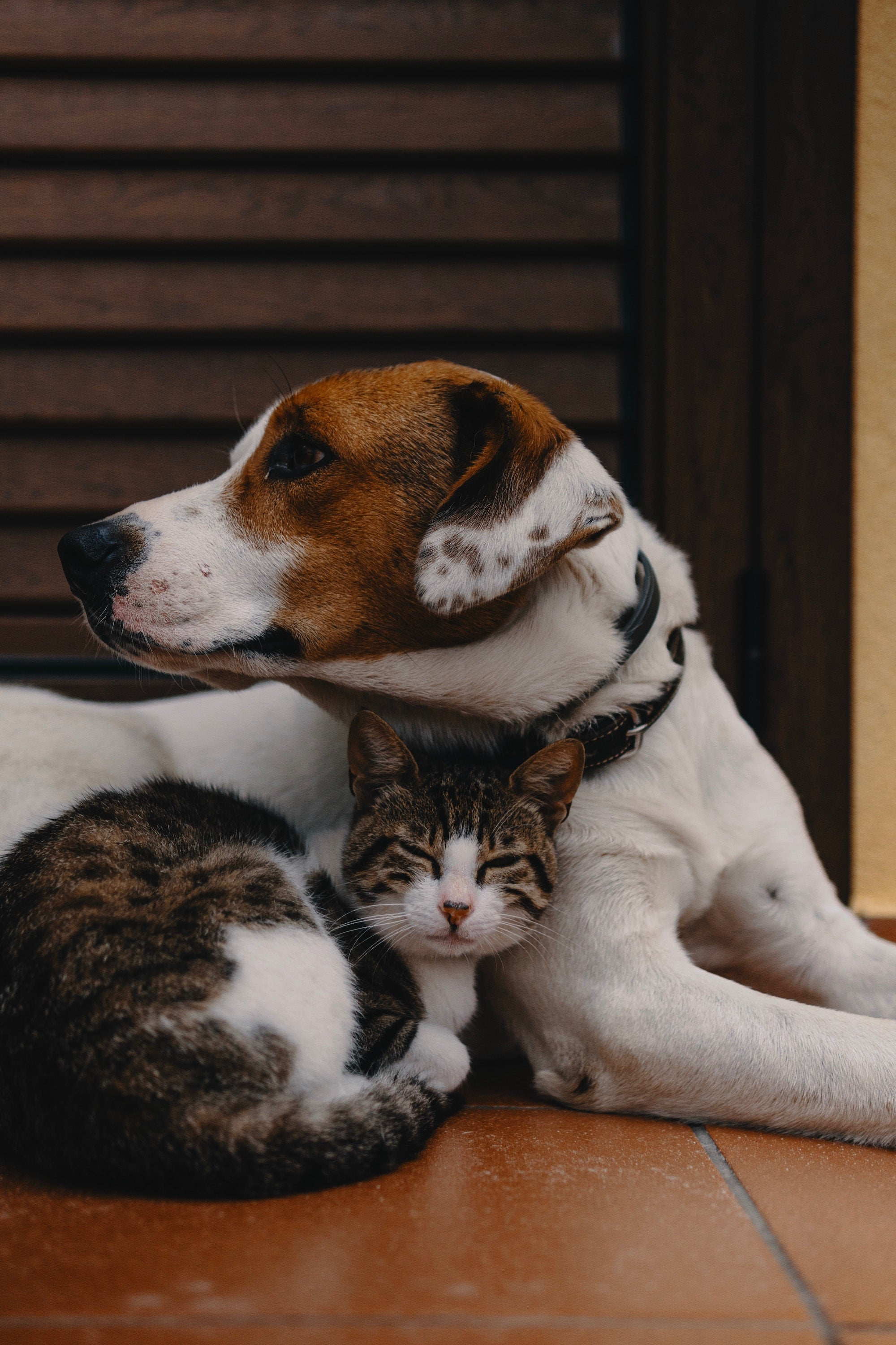 cat with a dog